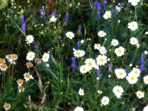 So schön ist eine schwedische Sommer Blumenwiese