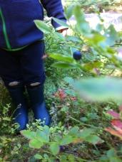 Unerlässlich .. Mückenschutz und Gummistiefel! So kommt man beim sammeln im Wald zu den dicksten Blaubeeren.