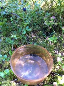 Der Sammel Erfolg meines Sohnes .. meer Blaubeeren wanderten aus dem Wald in den Mund :)