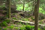 Wald mit Leuchteaugen.