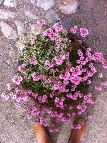 Im Schlosskaffee gibt's Blumen ..