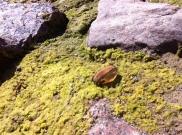Auf dem Boden eine Muschel.