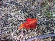 Woher kommt bloß dieses Herbstblatt auf dem Boden :O