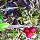 Tolle Farben im Wald.