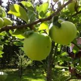 Wenigstens ein paar Äpfelchen!