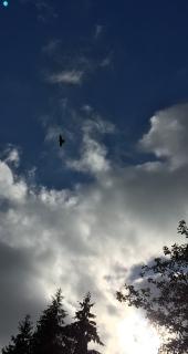 Suchbild der Luft ;)