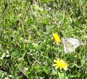 So schön auch als Schmetterling.