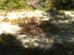 Wie riecht Wald? Weißmoos