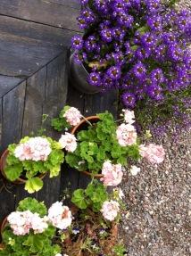 Blumen beim Café