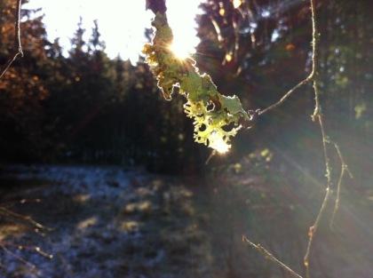 Strahlebilder Sonnen strahlen im Geäst fangen sich im Wassertropfen am Ast