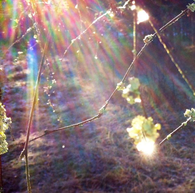 Sonnendurchwirkt glitzern zu Eis erstarrte Tropfen der frostigen Kälte stolz entgegen. Bunte Strahlen fallen durch sie hindurch zur bereiften Erde .. es glitzert.