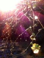 Alles leuchtet im Licht