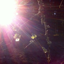 Sonnenstrahl