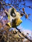 frostiges Herbstblatt am Baum