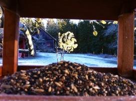 Blick aus dem Vogelhaus mit Futterhäuflein auf den Garten mit einzelnem Obstbäumchen