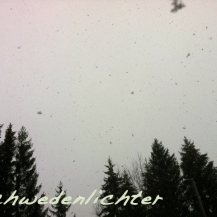 Schnee fällt sacht auf dunkle Tannen vor dem Haus