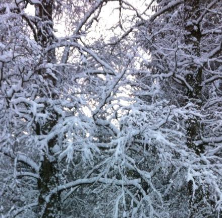 Dieses spezielle Licht wenn Schnee sanft niederfällt